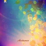 De rode en gele bladeren van Autumn Colorful Royalty-vrije Stock Afbeeldingen