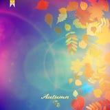 De rode en gele bladeren van Autumn Colorful Stock Afbeeldingen