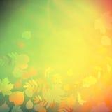 De rode en gele bladeren van Autumn Colorful Stock Afbeelding