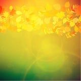 De rode en gele bladeren van Autumn Colorful Royalty-vrije Stock Afbeelding