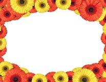 De rode en gele gerberabloemen leiden tot een kader op wit Stock Afbeelding