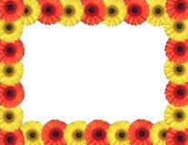 De rode en gele gerberabloemen leiden tot een kader op wit Stock Foto