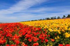De rode en Gele hemel van de Bloemen blauwe wolk Royalty-vrije Stock Afbeeldingen