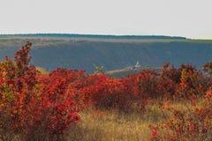 De rode en oranje herfst in de wereld Stock Foto's