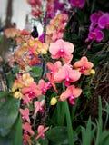 De rode en roze orchidee is bloemen stock afbeelding