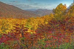 De rode esdoornbladeren zijn trillend tijdens de daling. Royalty-vrije Stock Fotografie