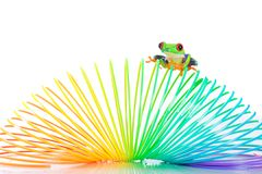 De rode Eyed Kikker van de Boom binnen een kleurrijke rol Stock Foto