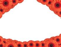 De rode gerberabloemen leiden tot een kader op wit Royalty-vrije Stock Foto