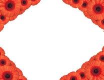 De rode gerberabloemen leiden tot een kader op witte achtergrond Stock Fotografie