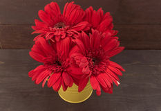 De rode gerberabloemen zijn in de bloempot, op houten backgrou Stock Fotografie