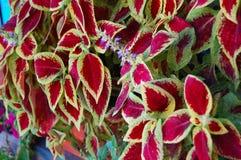 De rode Groene Textuur van Bladeren royalty-vrije stock fotografie