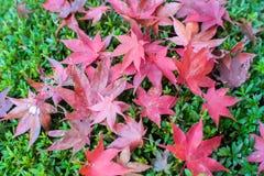 De rode herfst Stock Afbeelding