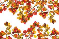 De rode Herfst van het Gebladerte over Wit Royalty-vrije Stock Afbeeldingen