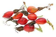 De rode de herfstbessen van bos wilde heupen bevatten een hoop stock afbeeldingen