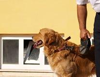 De rode hond royalty-vrije stock foto