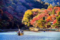 De rode Japanse daling van de esdoornherfst, momijiboom van Kyoto Japan Royalty-vrije Stock Foto's