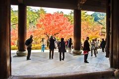 De rode Japanse daling van de esdoornherfst, momijiboom van Kyoto Japan Stock Afbeeldingen