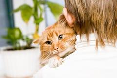 De rode kat Stock Afbeelding