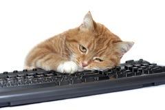 De rode kat legt op het toetsenbord Stock Foto's