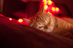 De rode kat ligt op de bank Royalty-vrije Stock Afbeelding