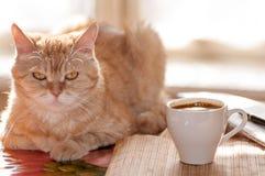 De rode kat ligt op de lijst naast de Kop van koffie stock foto's