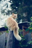 De rode kat op de omheining royalty-vrije stock fotografie