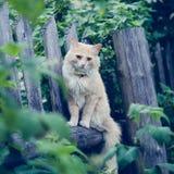 De rode kat op de omheining royalty-vrije stock afbeelding