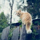 De rode kat op de omheining stock fotografie