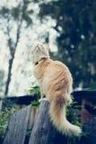 De rode kat op de omheining stock foto's
