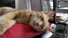 De rode kat slaapt op een rood hoofdkussen Slaapkat met hoofdkussen stock video