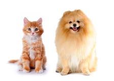 De rode kleur van de kat en van de hond stock afbeeldingen