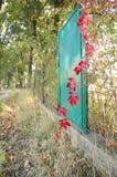 De rode klimopbladeren in de herfst Royalty-vrije Stock Foto's