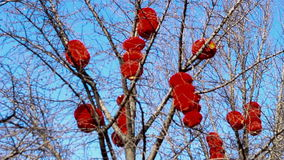 De rode lantaarn die in de boom van park hangen,