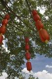 De rode lantaarns hangen op de boom Royalty-vrije Stock Afbeeldingen