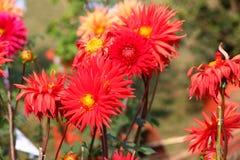 De rode lente Stock Foto's