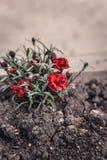 De rode lente bloeit uitstekend effect royalty-vrije stock afbeeldingen