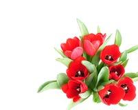 De rode lentetulpen Stock Foto's