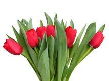De rode lentetulpen Stock Foto