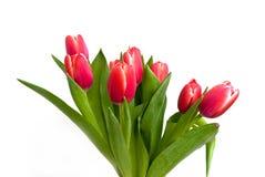 De rode lentetulpen - bouquet.close omhoog Stock Fotografie