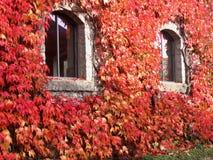 De rode Muren van de Klimop Royalty-vrije Stock Afbeelding