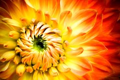 De rode, oranje en gele bloem van de vlamdahlia met gele en groene centrum dichte omhooggaande macrofoto royalty-vrije stock afbeeldingen