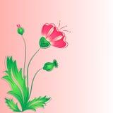 De rode papaver met knoppen en bladeren. Royalty-vrije Stock Foto