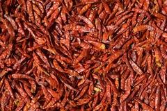 De rode Peper die van de Spaanse peper in de Zon drogen Royalty-vrije Stock Foto's