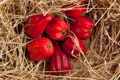 De rode peper van Spaanse peperhabanero Royalty-vrije Stock Fotografie