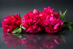 De rode pioen bloeit boeket op donkere achtergrond Stock Foto's