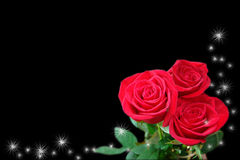 De rode rozen op zwarte achtergrond. Stock Foto