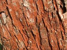 De rode textuur van de boomschors Royalty-vrije Stock Afbeeldingen