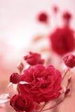 De rode tuin nam toe Stock Fotografie