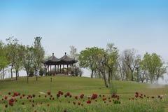 De rode tulpen en de paviljoenen royalty-vrije illustratie