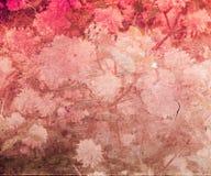 De rode Uitstekende Textuur van de Bloem Stock Fotografie